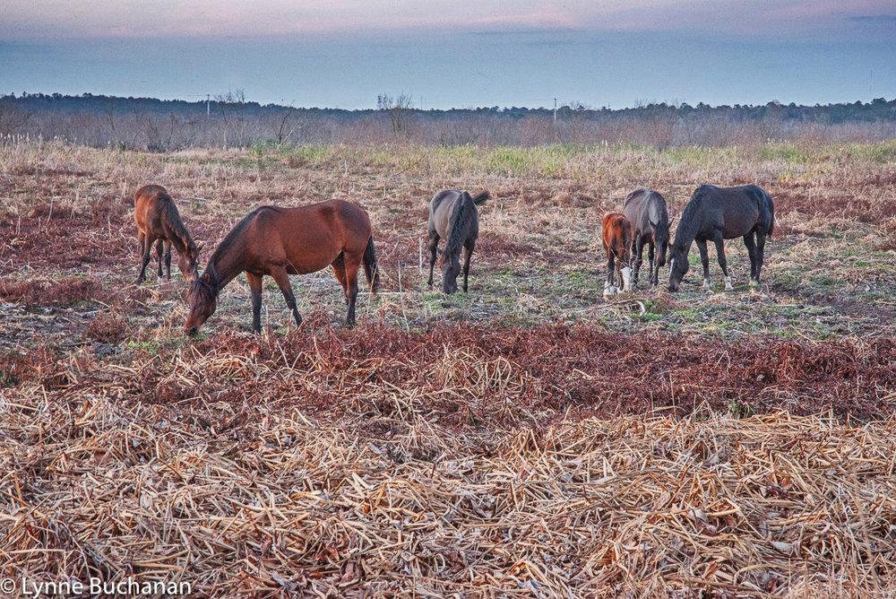 Wild Horses at Dusk