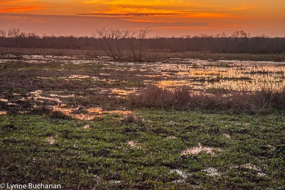 Last Light Paynes Prairie