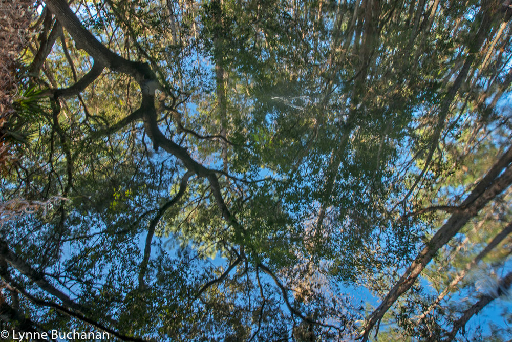 Grandiose Tree Reflections, Big Creek