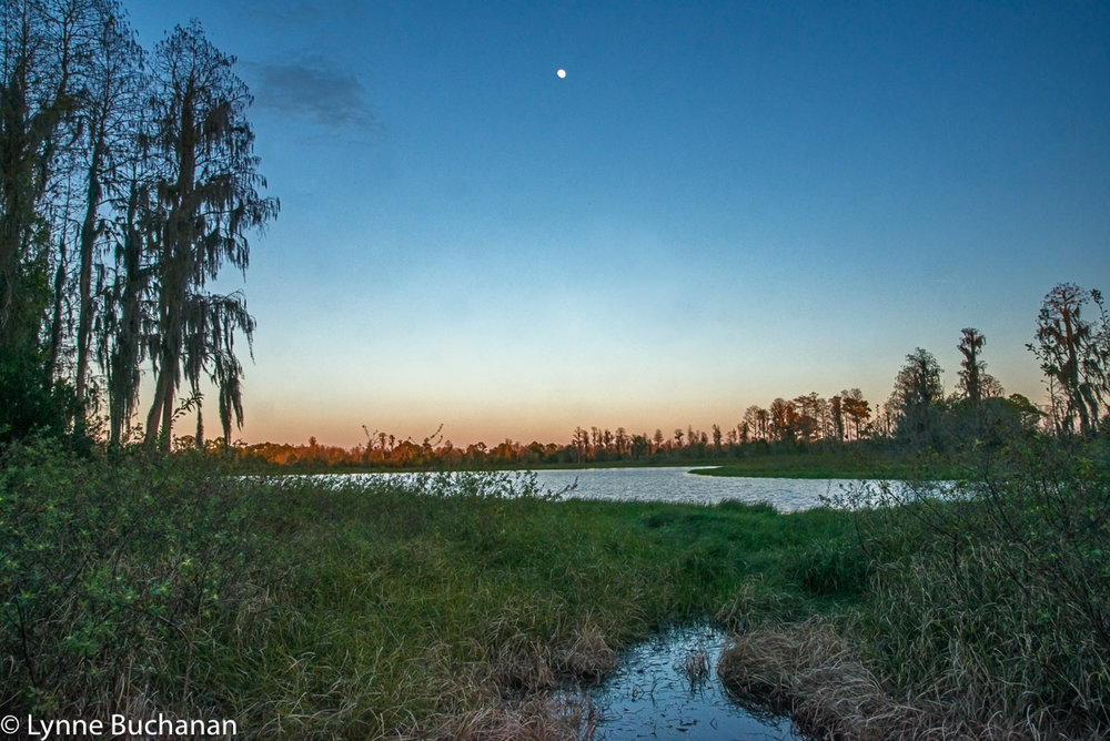Moon Over Peat Lake in the Hilochee Wildlife Management Area