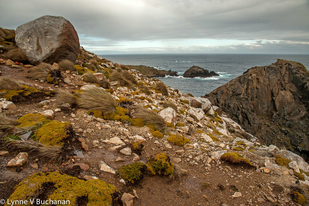Cape Horn Rocky Coastline with Vegetation