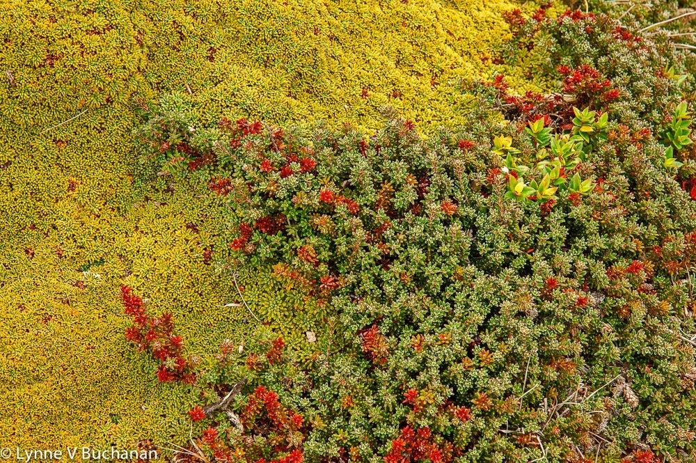 Cape Horn Bryophytes