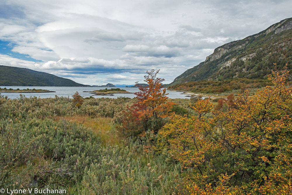 Fall Color, Tierra del Fuego