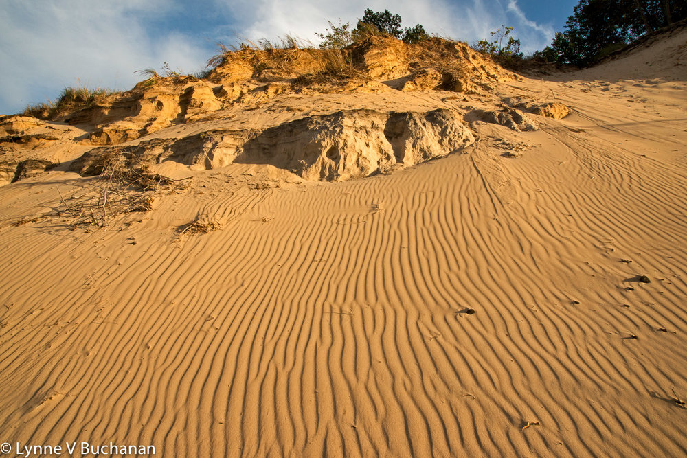 Dunes Near Mount Baldy at Indiana Dunes National Lakeshore
