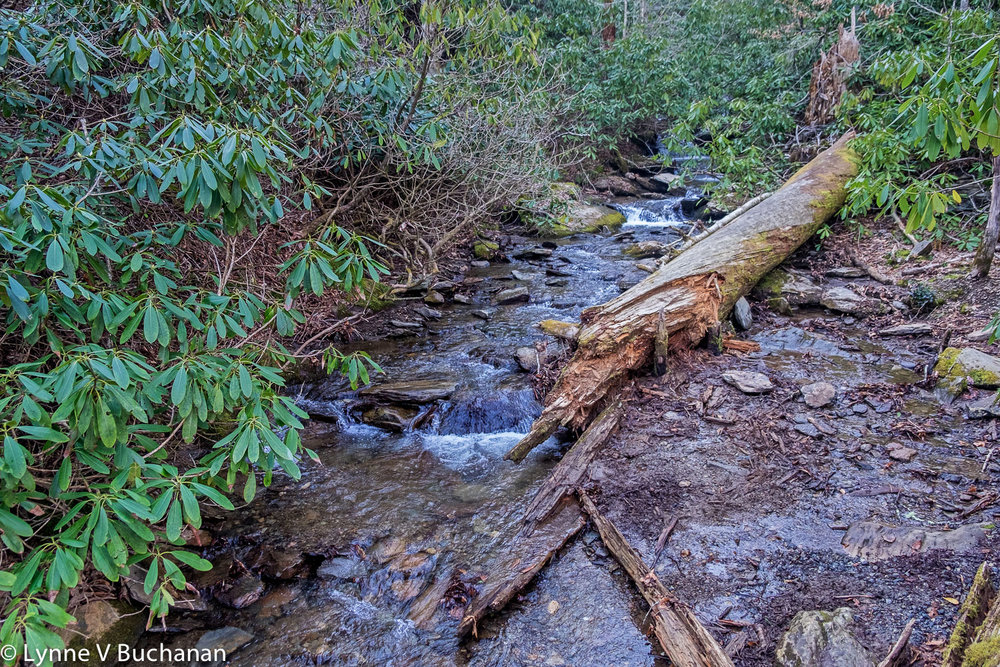 Fallen Tree in a Stream