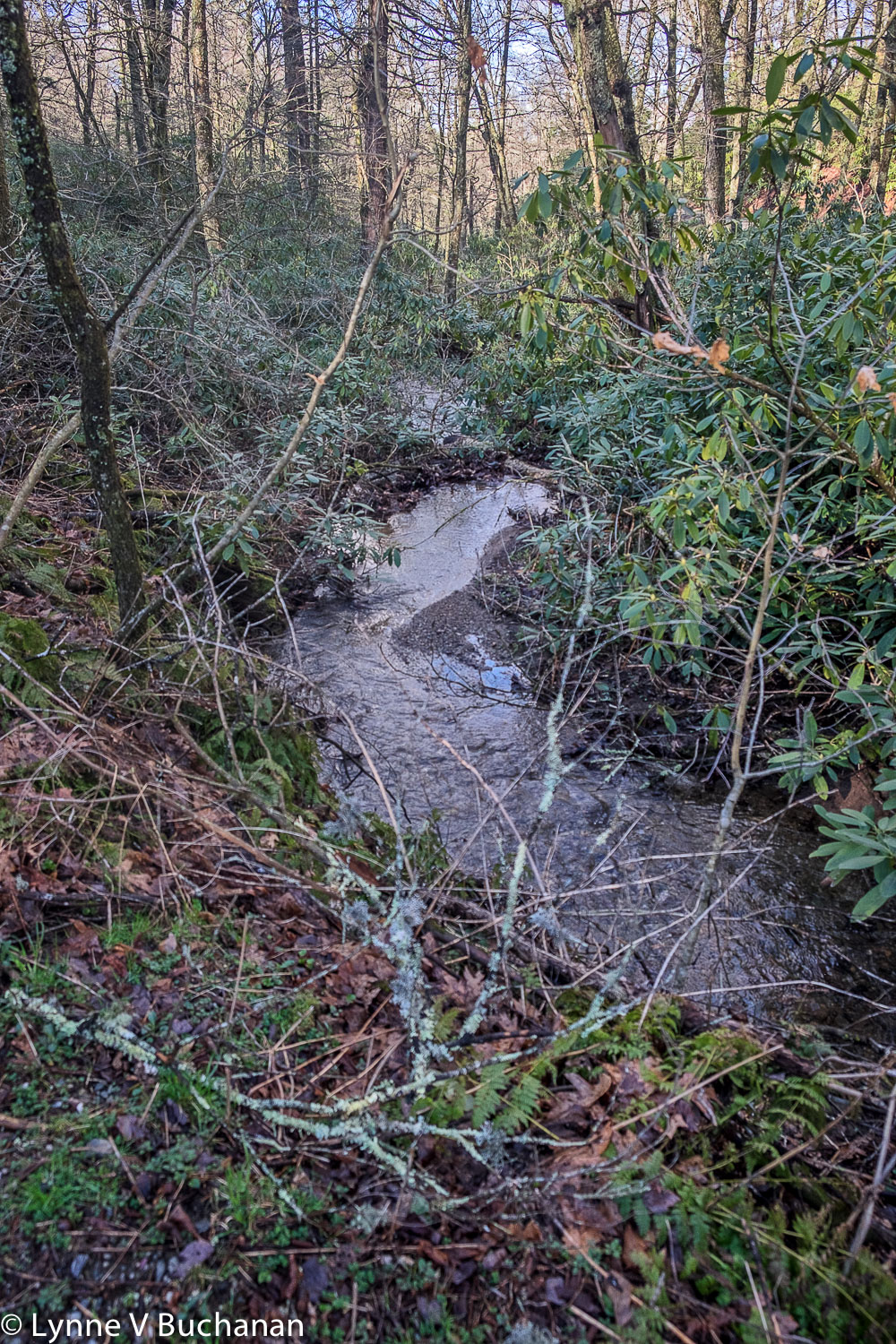 Natural Riparian Bank