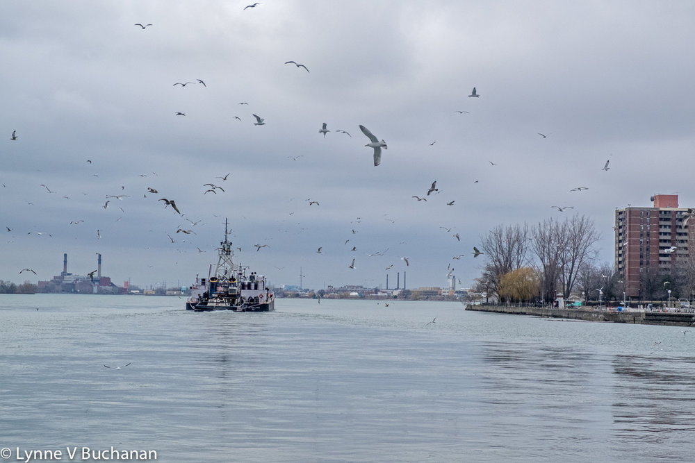 Birds Flying Over a Cargo Ship, Niagara River