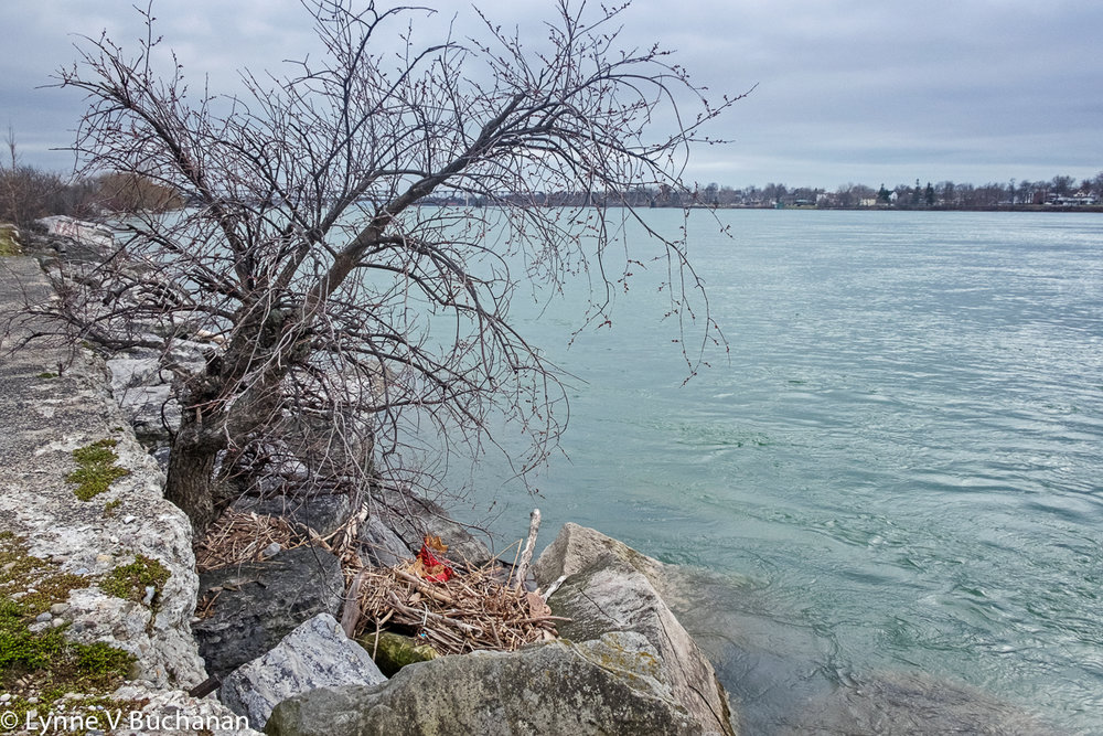 Tree Growing in Trapped Dirt Along a Pier, Niagara River