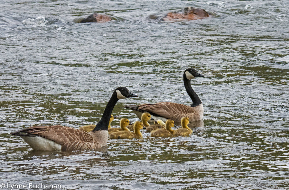 Teaching the Family to Swim in Turbulent Waters