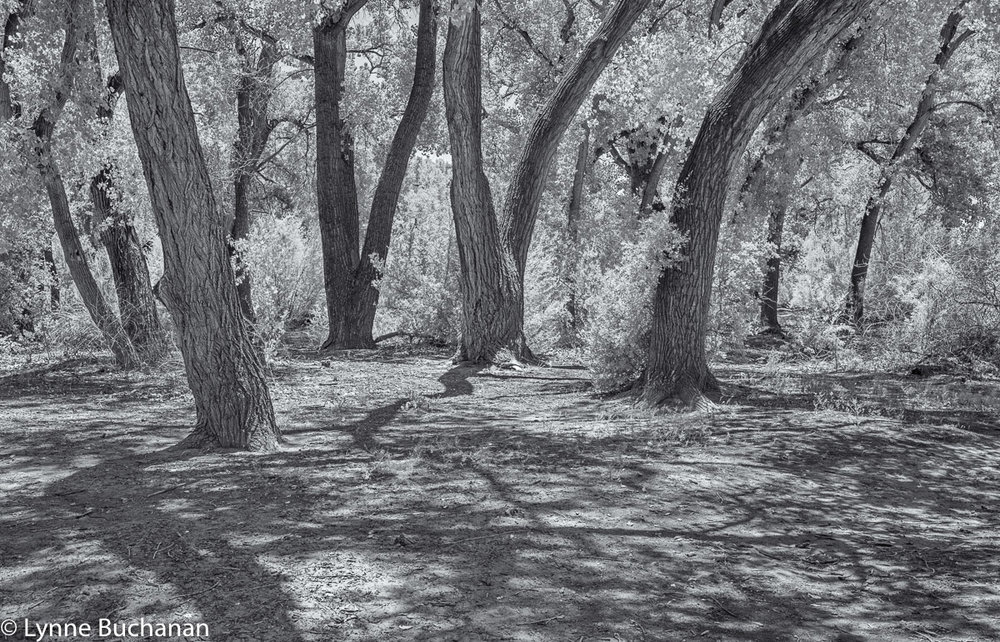 Trees and Shadows, Alameda Open Space