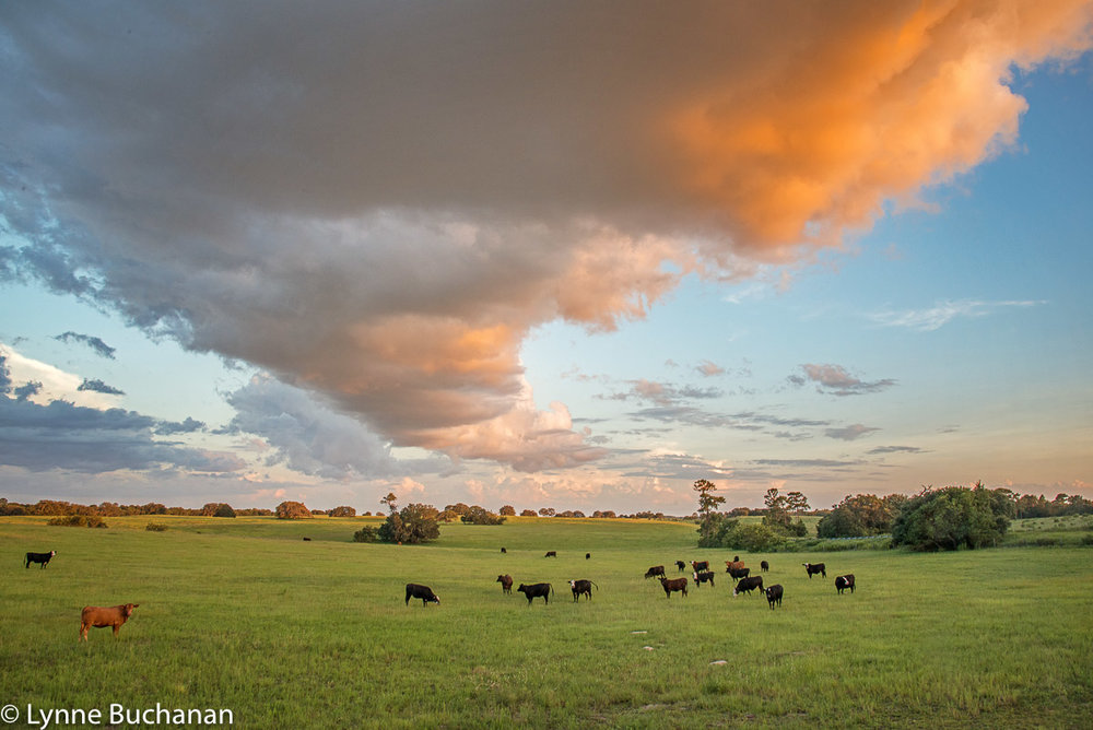 Cloud Over a Bucolic Field at Sunset