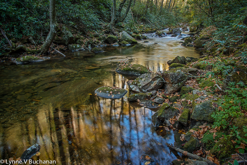 Nantahala Forest Road Creek with Reflections