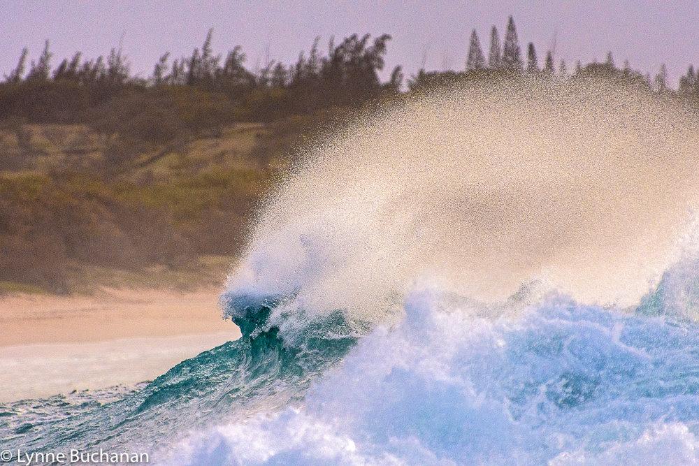 Shock Top Wave