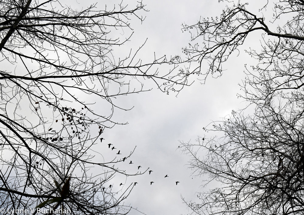 Branches and Cranes Migrating South
