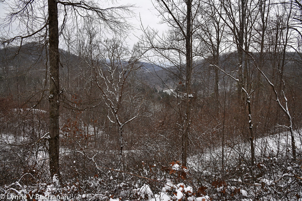 Asheville Winter on My Mountain Ridge0097.jpg