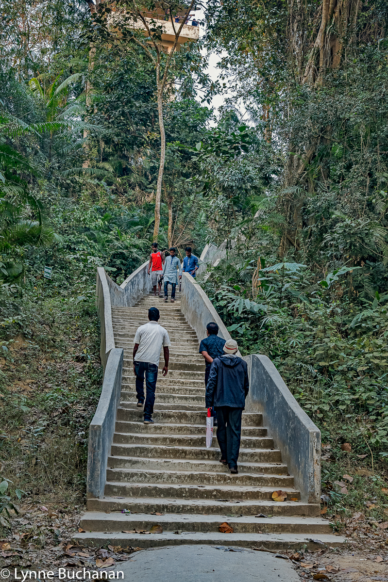 Satchori Forest, Steps to the Observation Tower