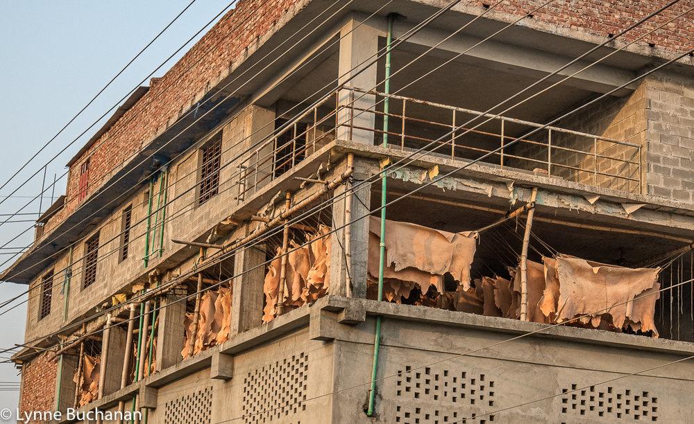 Hanging Hides, Savar Tannery Park
