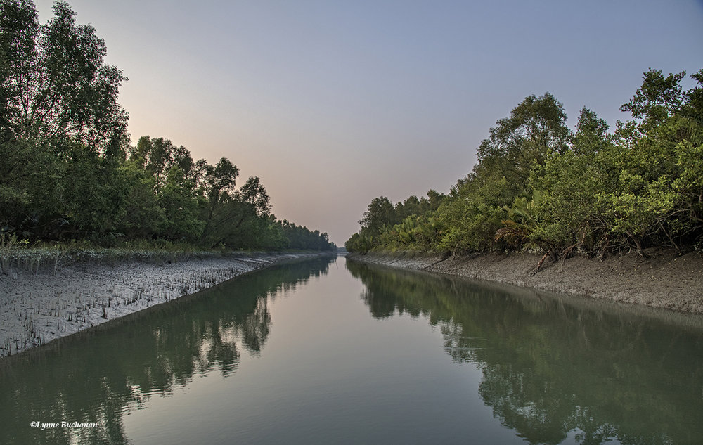 Sundarbans Canal, an Invitation to Infinity