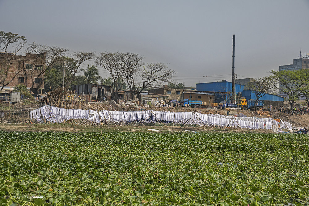 Textile Industry with Water Hyacinths Proliferating from Untreated Waste