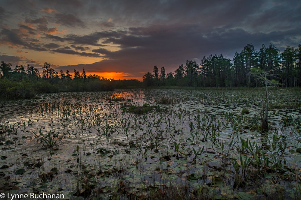 Sunrise over the Okefenokee Swamp