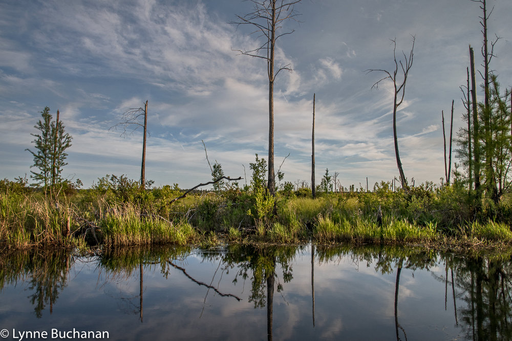 Okefenokee Swamp Where the Fires Burned