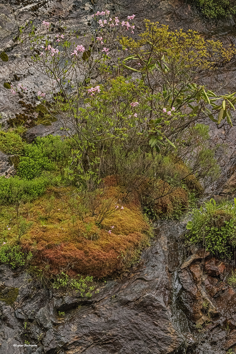 Vertical Bog with Moss, Grasses, and Azaleas