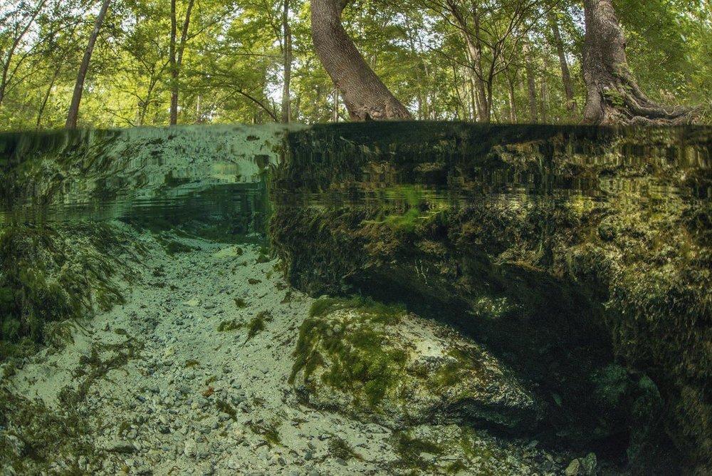 Mermaind Springs, Water is the Foundaiton of Life.jpg