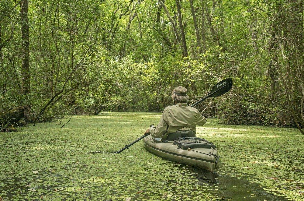 Serge Kayaking in the Salvinia, Tate's Hell.jpg