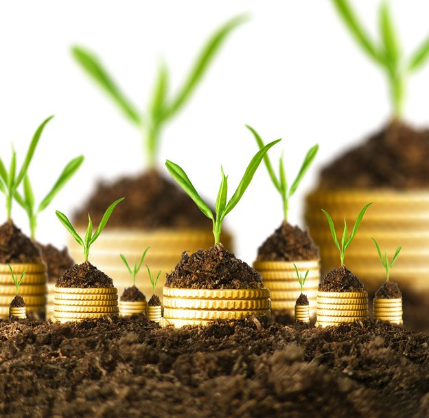 coins and growing plants