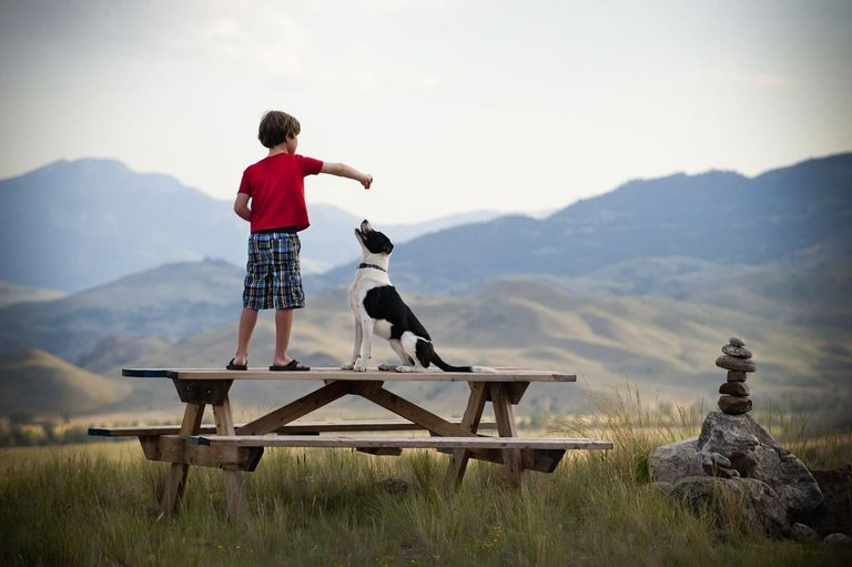 boy playing with dog