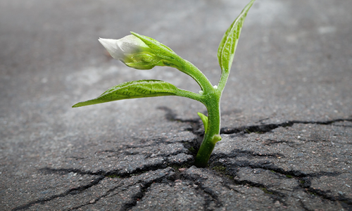 plant sprouting from concrete