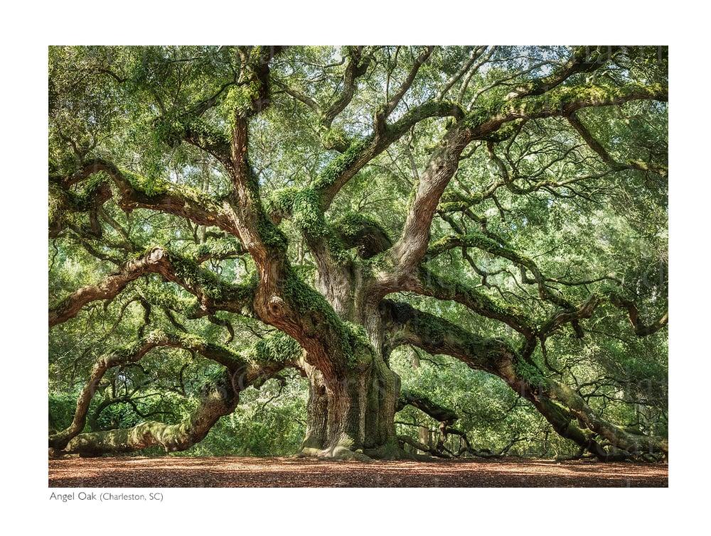 tree_73.jpg