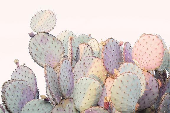 prickly sm.jpg