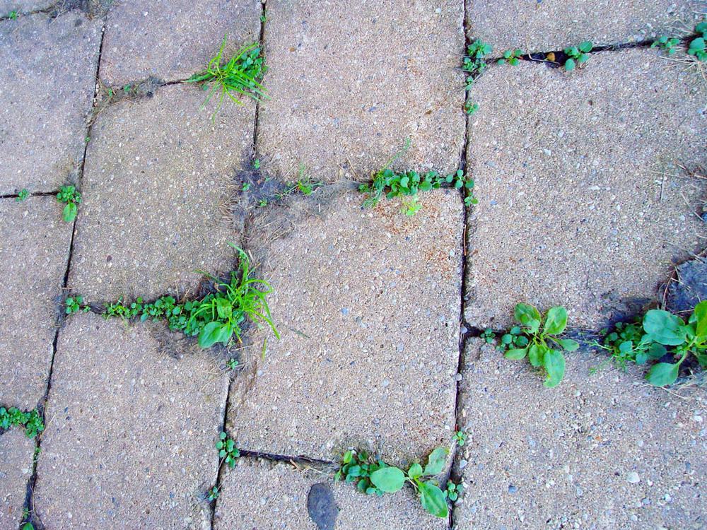 Weeds on your pavement