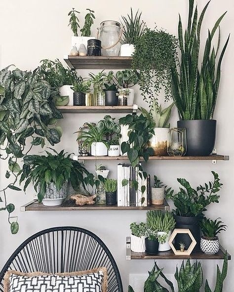 We supply you with a large range of organic fertilizers and insecticides, to keep your indoor plants looking lush and healthy. . . . #horticulture #organic #oils #green #cleanair #healthy #pests #pesticides #wallfeatures #landscapingdesign