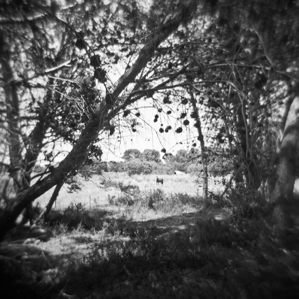 Hindmarsh Island042.jpg
