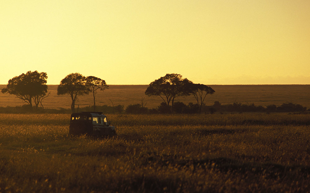 safaricouchant.jpg