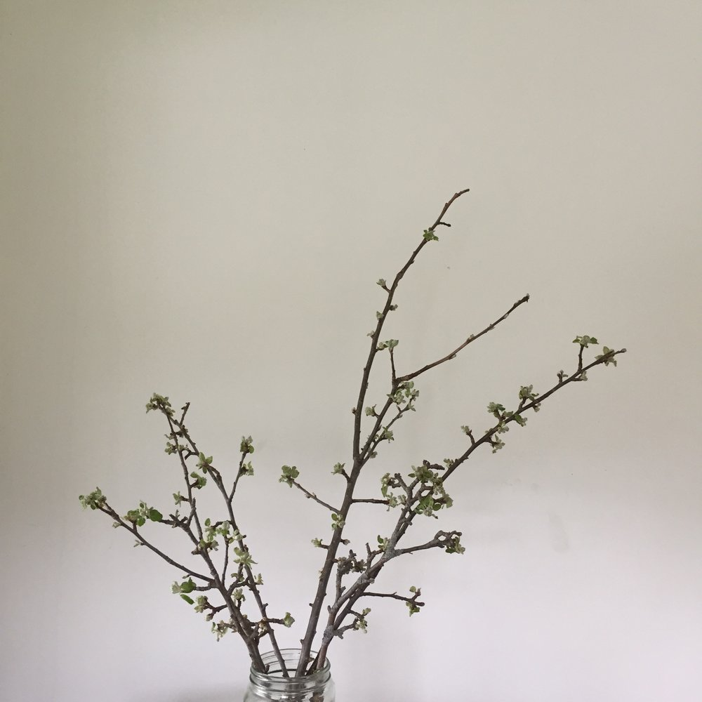 Appleblossom branches