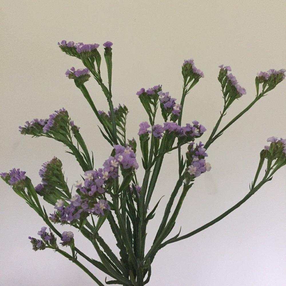 Statice Lavender