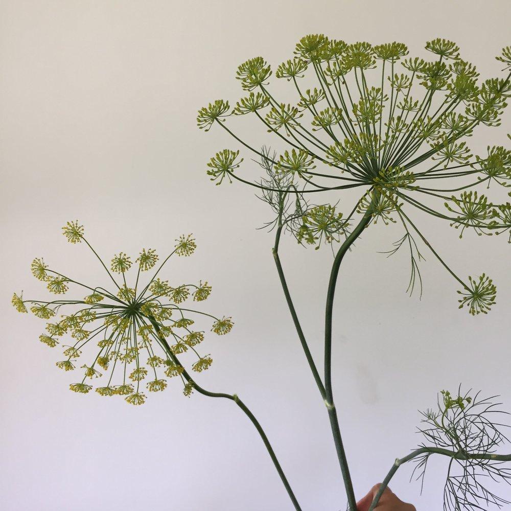 Bouquet Dill