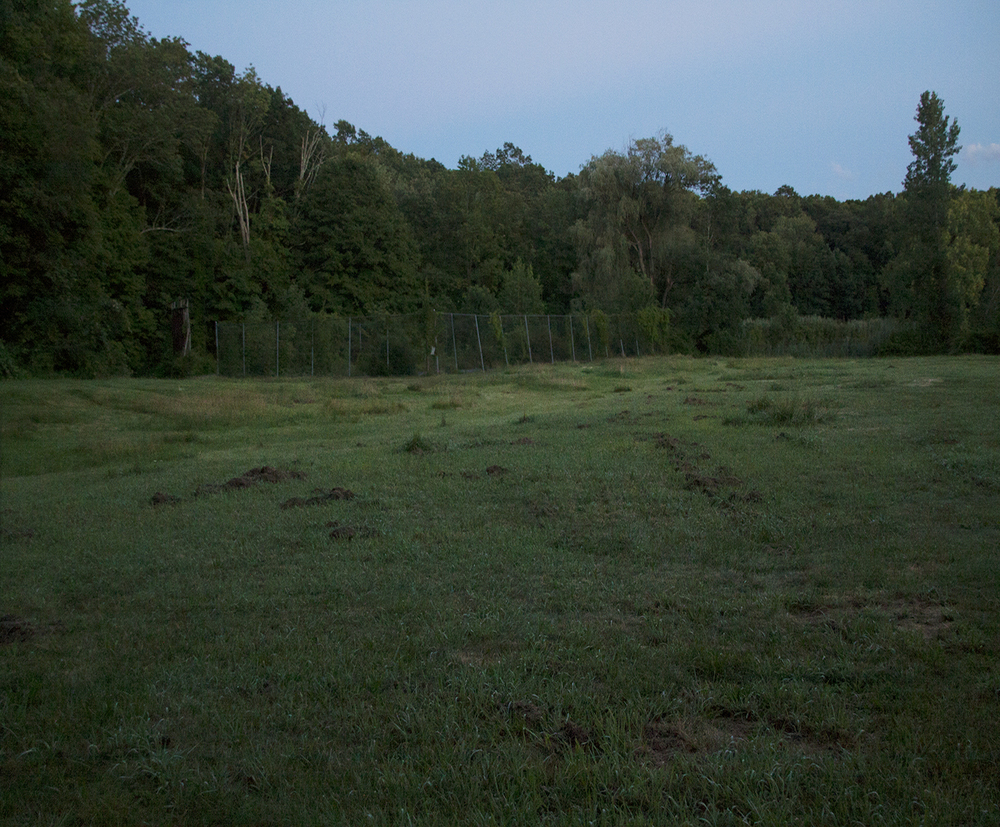 grasslandDIGI_SITE.jpg