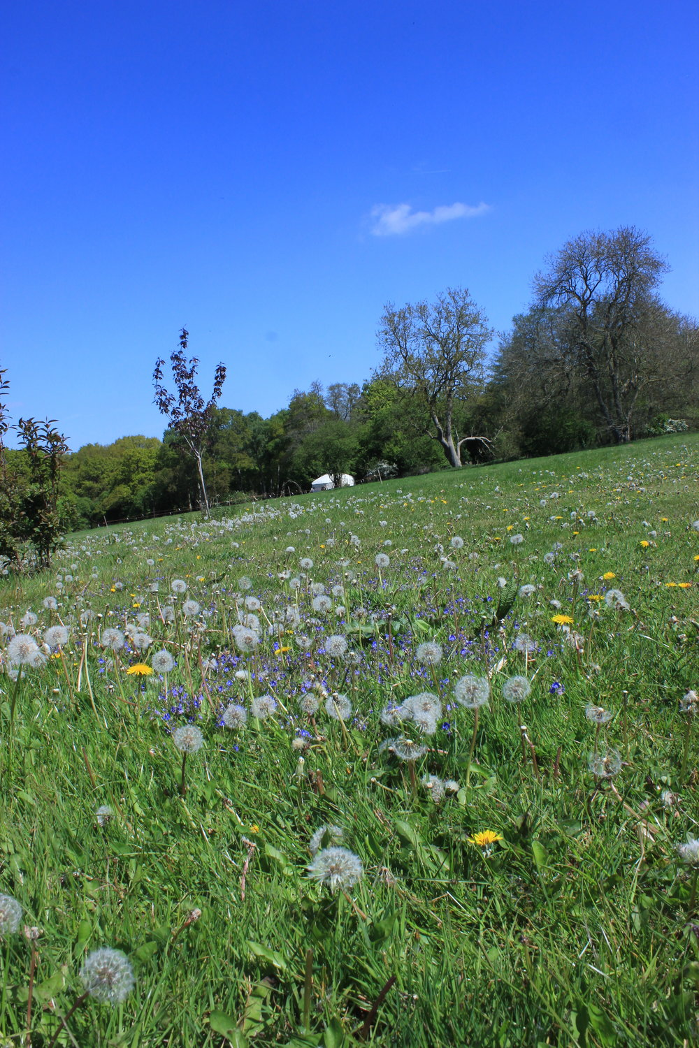 Yurt meadow in perfect glamping weather