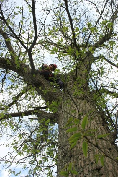 Seb's first tree climb