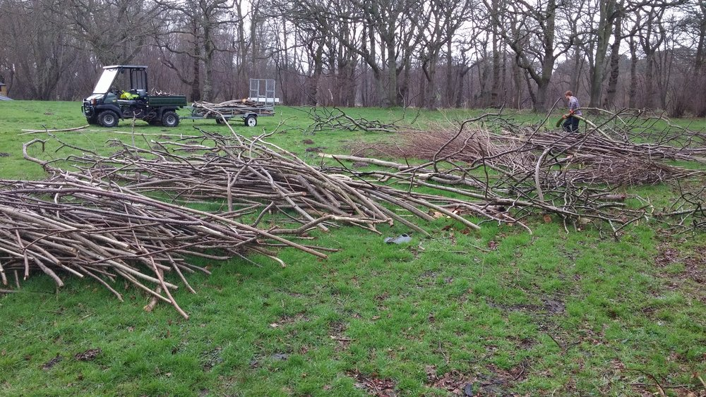 What a lot of wood! Coppicing harvest for winter 2016/17