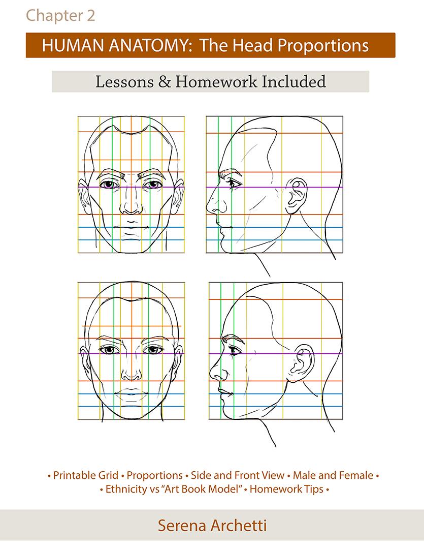 Human Anatomy Head Proportions Tutorial And Homework Serena Archetti