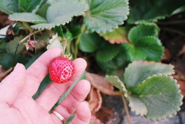 berry 2.jpg