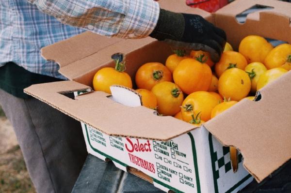 tomato 3.jpg
