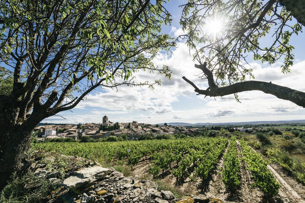 vinyeards Ludovic CHARLES (1).jpg