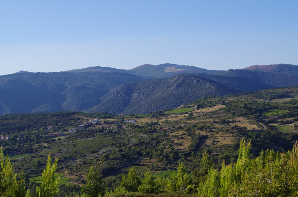Hill top vineyard view - jacques herviou.JPG