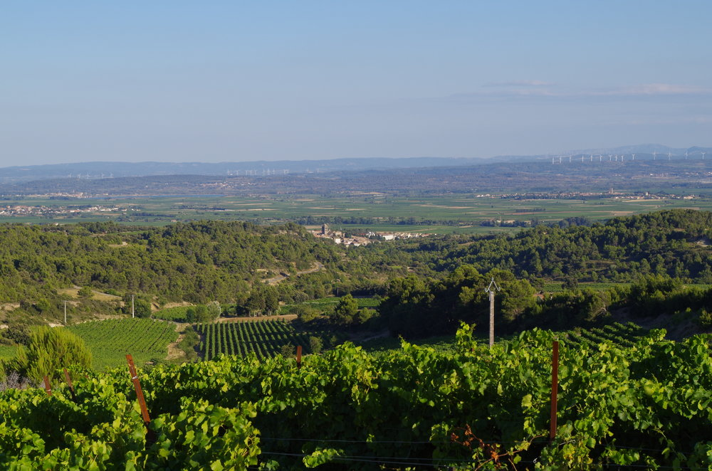 Tophillview La Liviniere from Las Combes vineyard - jacques herviou.JPG